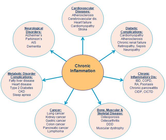 Chronic Inflammation Humpath Com Human Pathology
